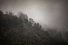 Dark, Foggy Hillside With Trees