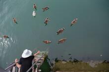 A Woman Hand Feeds A Group Of Ducks On An Alpine Lake.