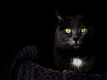 Black Cat With Green Eyes Looking At Camera