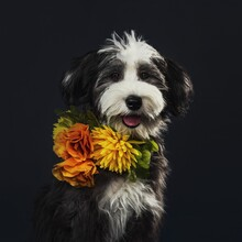 Image Of Fluffy Puppy Portrait