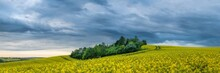 Panoramic View Of Trees Amongst Rapeseed Fields Near Kyjov With Dramatic Sky, Hodonin District, South Moravian Region, Moravia, Czech Republic