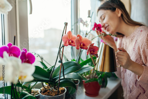 Obraz na plátně Watering orchids phalaenopsis with golden metal watering can
