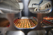 Chicken And Egg Production At Poultry. Factory Of Fresh Eggs.