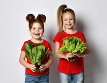 Two Little Girls In Red T-shirts Holding Freshly Grown Lettuce Leaves On A Gray Background.