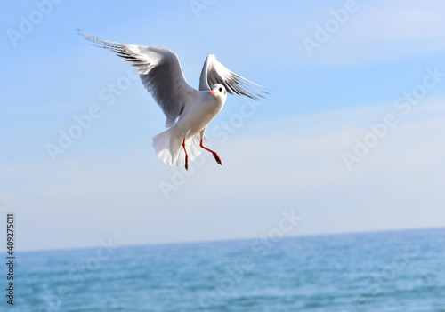 Photographie The seagull soared up so sharply that water droplets from the beak downward acco