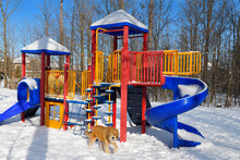 Outdoor Playground Jungle Gym And Slides In Winter With Snow And Scruffy Dog