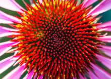 Echinacea Centre