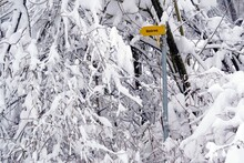 Winter Landscape In Detail, Tree Branches Thickly Covered With Snow And Yellow Signposts With Inscription Hiking Trail German Language, Village Urdorf In Switzerland With Copy Space On The Background.