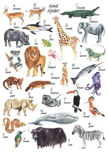 Watercolor Alphabet. Abc Poster. Animal Alphabet. Watercolor Animal Illustration. Animal For Every Letter Of English Alphabet. Watercolor Hand Drawn And Hand Painted Clip Art, High Resolution, 300 Dpi