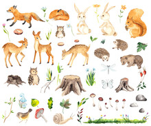 Watercolor Forest Animals Elements With Cute Little Deers, Foxes, Squirrel, Hedgehogs, Owls, Bear, Hares, Stumps, Mushrooms, Flowers, Twigs, Grass, Butterfly And Dragonfly
