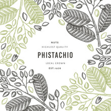 Hand Drawn Phistachio Branch And Kernels Design Template. Organic Food Vector Illustration On White Background. Retro Nut Illustration. Engraved Style Botanical Banner.