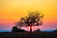 Setting Sun Behind A Single Tree With Colourful Gradient In The Sky