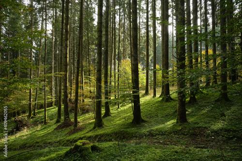 Obraz Bosco del Cansiglio in autunno - fototapety do salonu