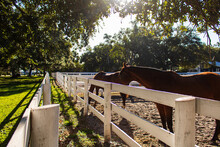 Fantastic Shot Of Two Horses In A Fenced Field In A Sunny Da
