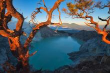Dead Tree On Kawah Ijen Crater In East Java, Indonesia