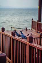 Pigeons On The Fence At The Lake Side.