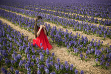 Girl In Red Dress Sitting In Purple Field Of Hyacinth Flowers Hiding Her Face With Round Mirror