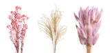 Set with beautiful decorative dry flowers on white background, banner design