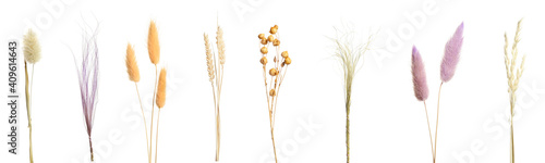 Fotografia, Obraz Set with beautiful decorative dry flowers on white background, banner design