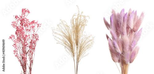 Set with beautiful decorative dry flowers on white background, banner design Tapéta, Fotótapéta