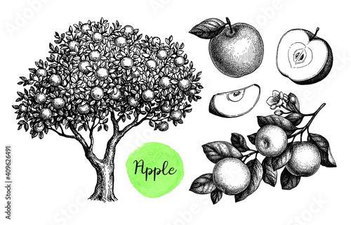 Apple sketch set. Fototapet