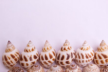These Are Snail Shell On White Background