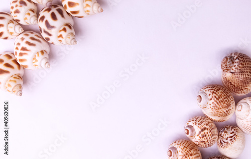 Photo These are snail shell on white background