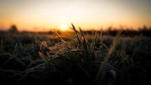 Sonnenaufgang Mit Gras