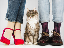 Cute, Charming Kitten And Young Couple In Stylish Shoes. White Background, Isolated, Close-up. Style, Fashion, Elegance