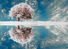 Tree Snow Ice One Big Isolated In A Meadow In Spring Enviroment Background