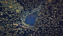 Aerial View Of Green Trees And Blue Water