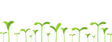 Agricultural Seedlings Field. Growing Young Plant Shoots. Crops Began To Sprout. Spring Season. Vector. Place For Your Text. Copy Space. Horizontal Banner.