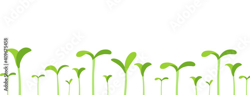 Agricultural seedlings field. Growing young plant shoots. Crops began to sprout. Spring season. Vector. Place for your text. Copy space. Horizontal banner. - fototapety na wymiar