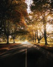 Black Asphalt Road Between Brown Trees