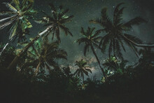 Green Coconut Tree Under Blue Sky During Night Time