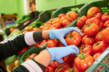 Grocery Worker Wearing Blue Latex Gloves And Putting Fresh Tomatoes In A Box