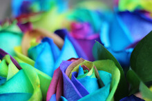 Rainbow-colored Roses