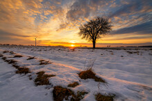 Beautiful Winter Sunset With Lonely Tree
