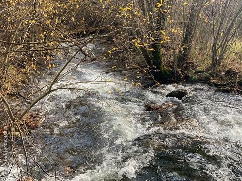 Cuadros en Lienzo stream in the forest in autumn