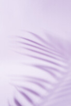 Abstract Vertical Background Of The Shadow Of A Palm Tree's Leaf In Purple