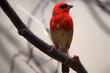 Leinwandbild Motiv vogel sitzend auf einem Ast