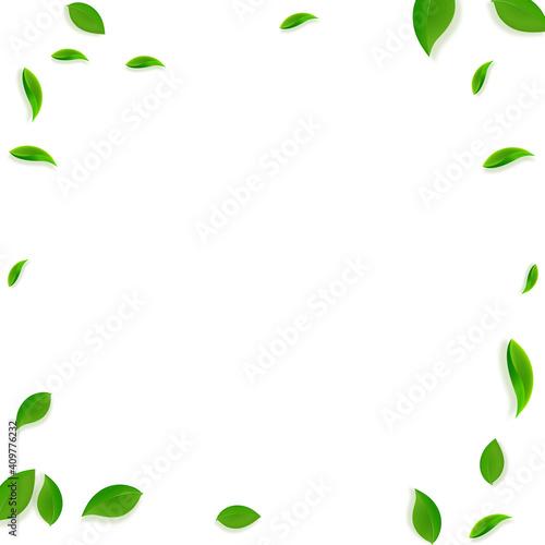 Fotografija Falling green leaves. Fresh tea chaotic leaves fly