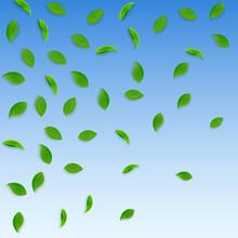 Falling Green Leaves. Fresh Tea Random Leaves Flying. Spring Foliage Dancing On Blue Sky Background. Adorable Summer Overlay Template. Optimal Spring Sale Vector Illustration.