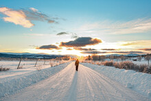Stunning Winter Landscape With Snow Covered Road In Northern Canada On A Beautiful, Blue Sky Day Surrounded By Birch, Willow Trees In Wilderness Setting With One, Isolated Person Walking.