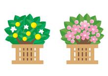 イラスト素材: ひなまつり 桜橘 桜 黄色い実