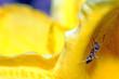 zdjęcie makro mrówki szukającej pożywienia