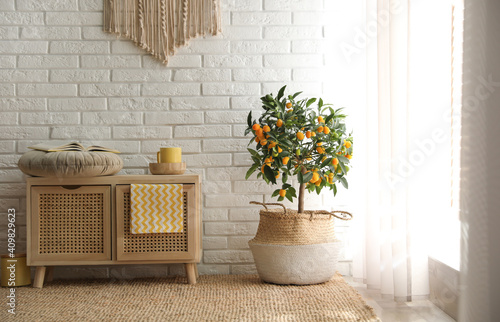 Stylish room interior with wooden cabinet and potted kumquat tree near white brick wall