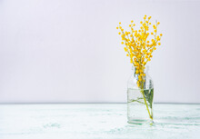 Glass Bottle With Yellow Mimosa Flowers Stand On A Wet Glass Background. Concept Of 8 March, Happy Women's Day.