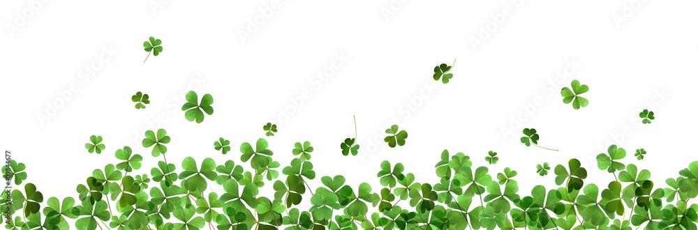 Fototapeta Fresh green clover leaves on white background, banner design. St. Patrick's Day