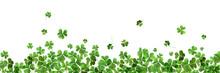 Fresh Green Clover Leaves On White Background, Banner Design. St. Patrick's Day